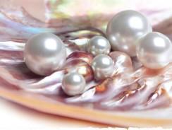 Ein Fest für die Perle