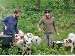 Happy as Pigs in Clover