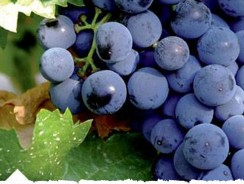 Tempranillo – the special grape & tapas!